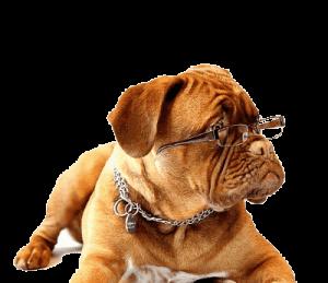 כלב מידען